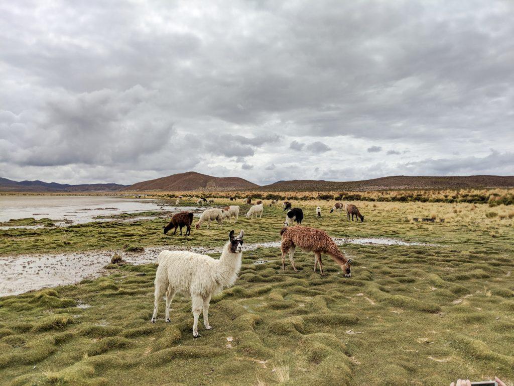Digital Nomad - Bolivia